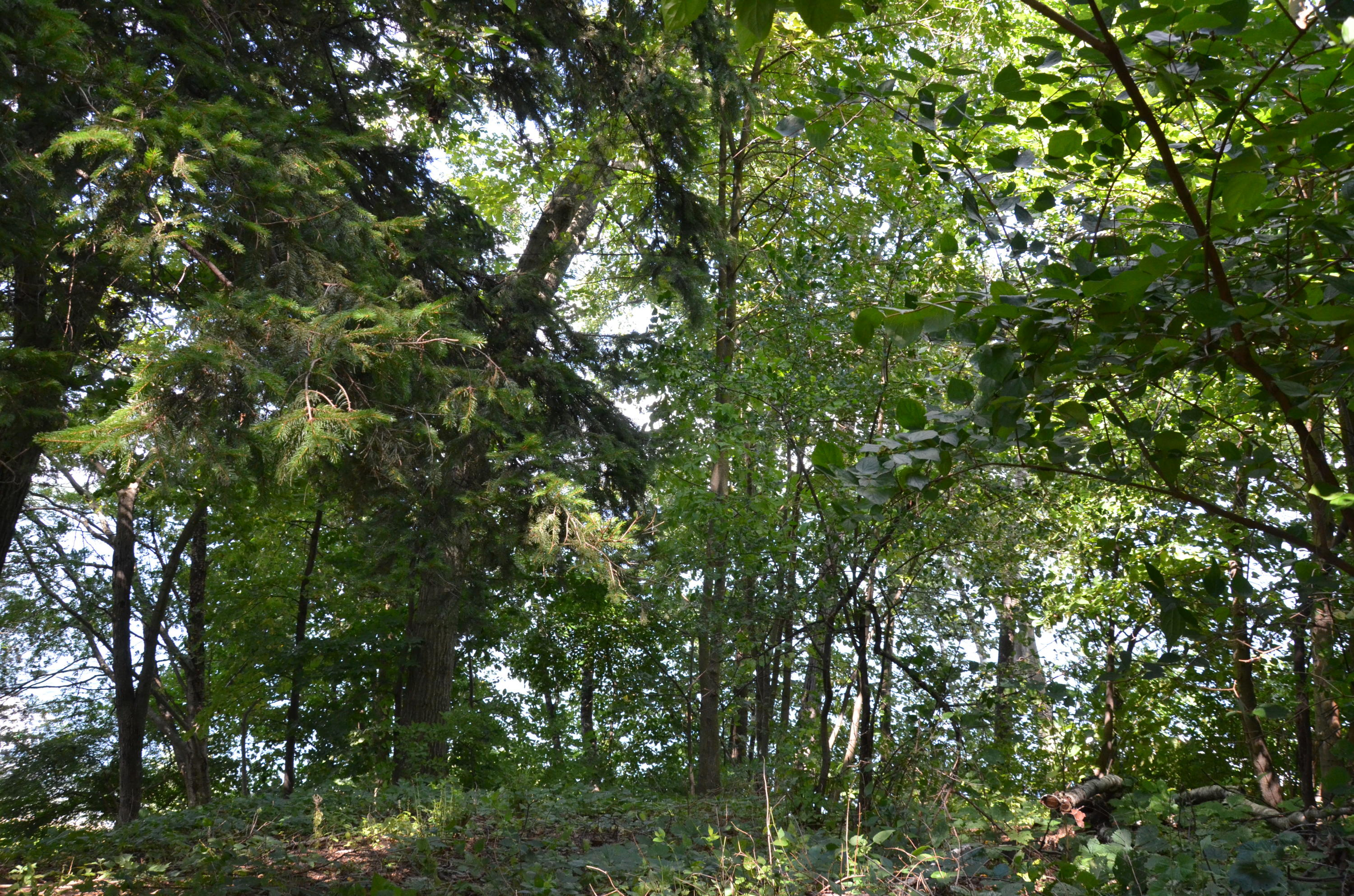 Lt3 Sandstone Ave, Green Lake, Wisconsin 54971, ,Vacant Land,For Sale,Sandstone Ave,1578786