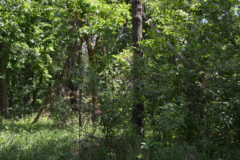 Lt92 Golf Ridge Cir, Mecan, Wisconsin 53949, ,Vacant Land,For Sale,Golf Ridge Cir,1645356