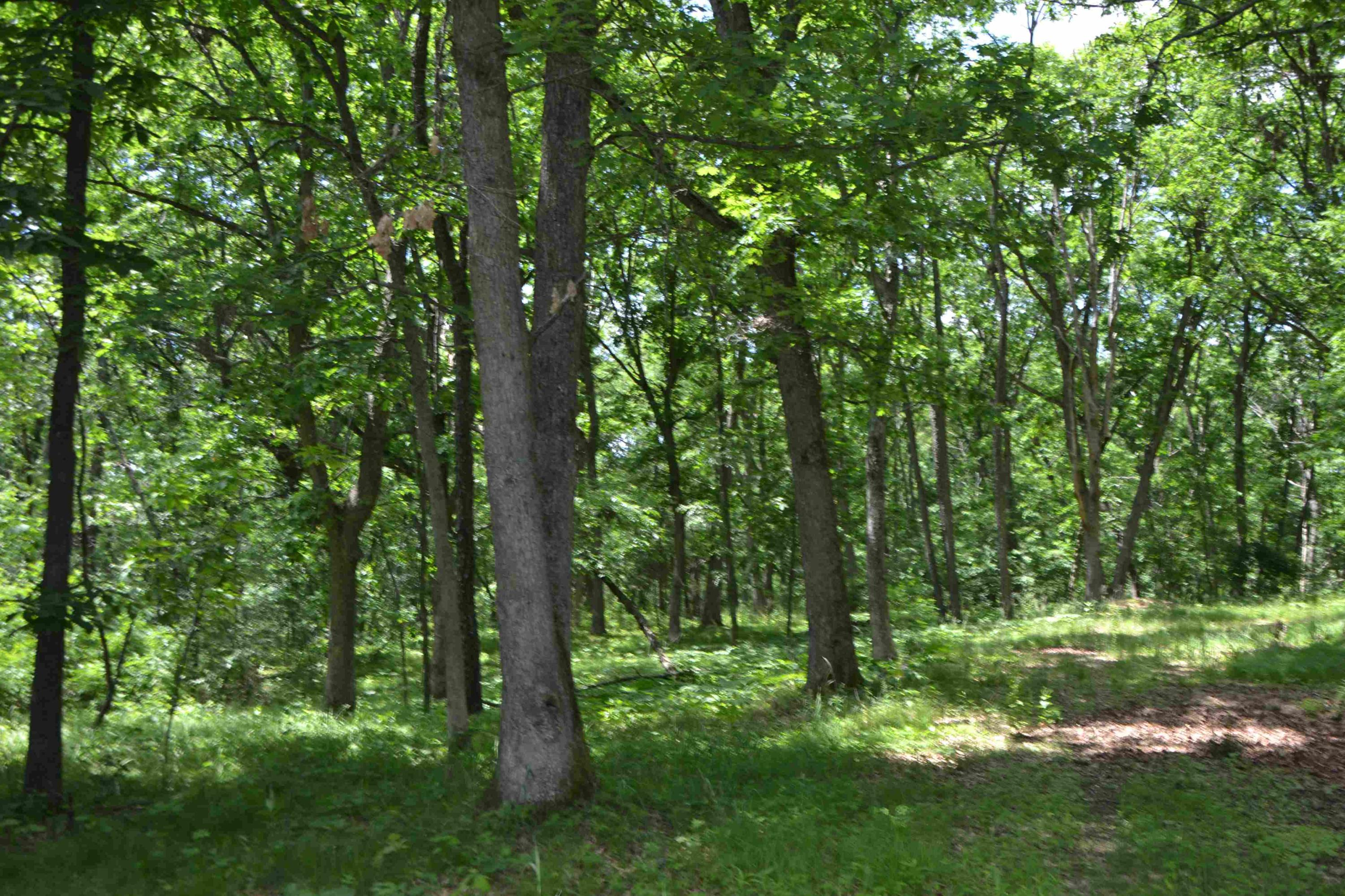 Lt106 Golf Ridge Rd, Mecan, Wisconsin 53949, ,Vacant Land,For Sale,Golf Ridge Rd,1645360