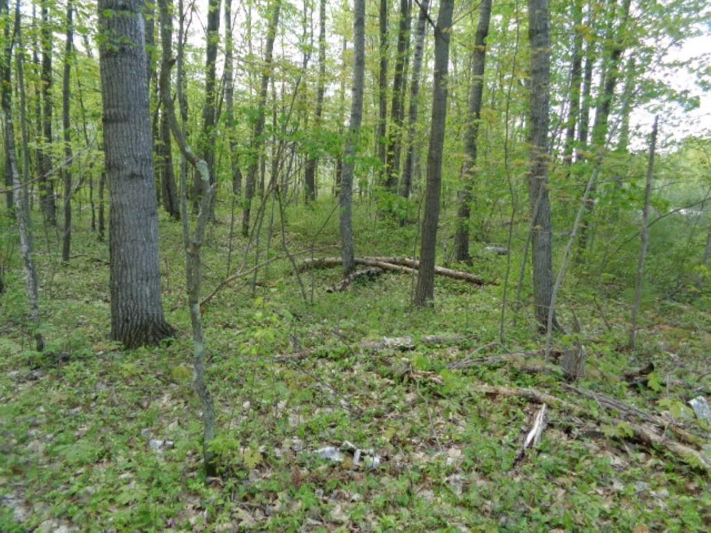 Lt13 Hedgewood Ct, Abrams, Wisconsin 54101, ,Vacant Land,For Sale,Hedgewood Ct,1624252