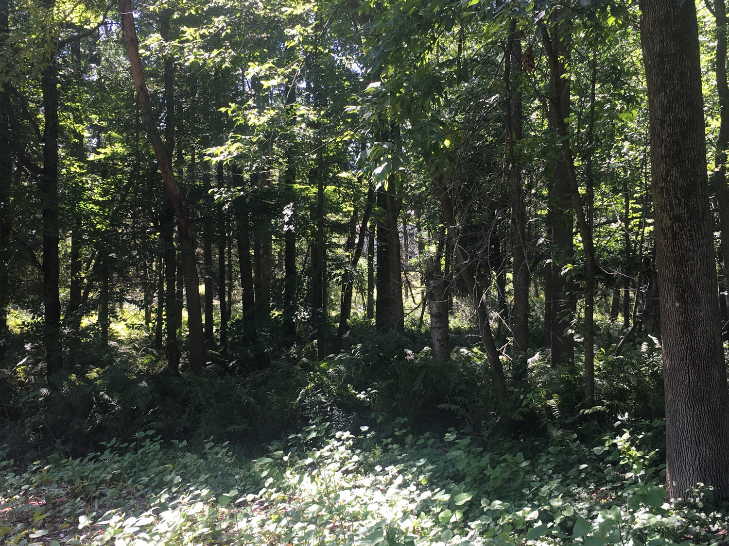 1.004 Acre 12TH ST, Sheboygan, Wisconsin 53081, ,Vacant Land,For Sale,12TH ST,1656409