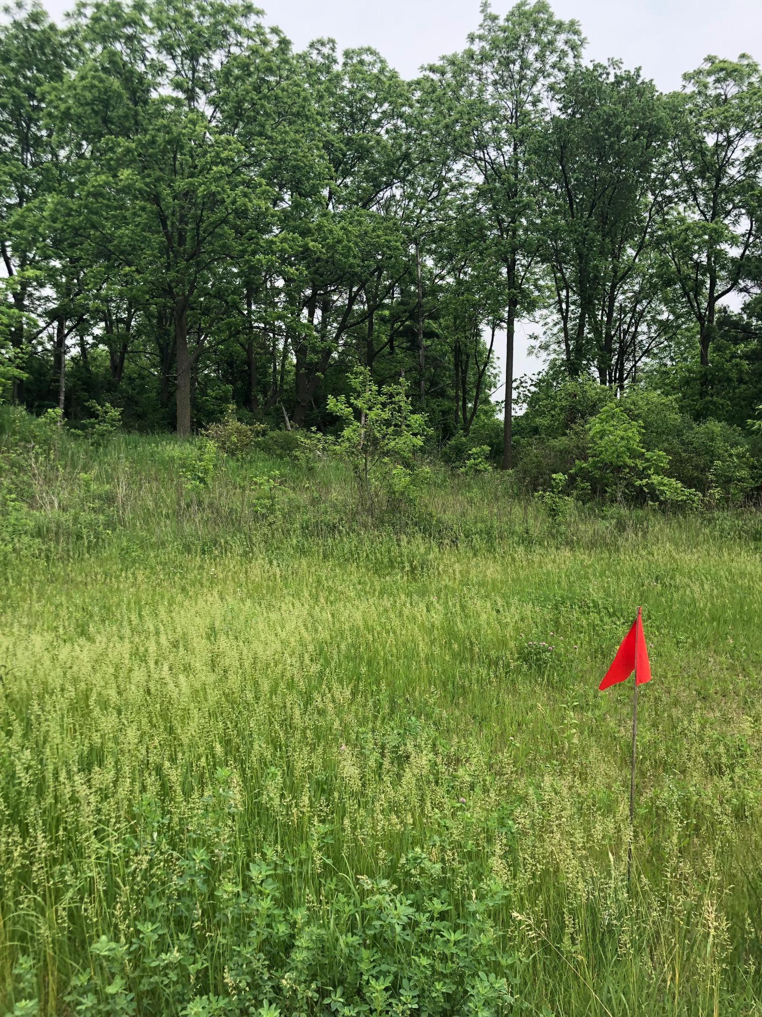 335 Duck Pond Ln, Darien, Wisconsin 53114, ,Vacant Land,For Sale,Duck Pond Ln,1686601