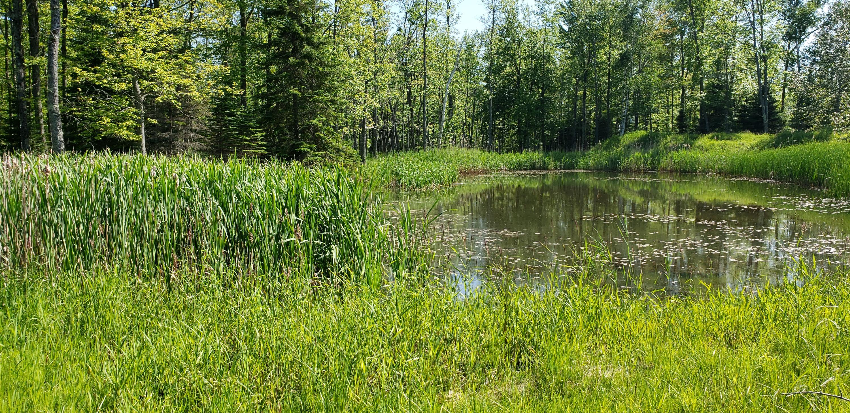 20 Acres Birch Creek Rd, Ingallston, Michigan 49858, ,Vacant Land,For Sale,Birch Creek Rd,1699152