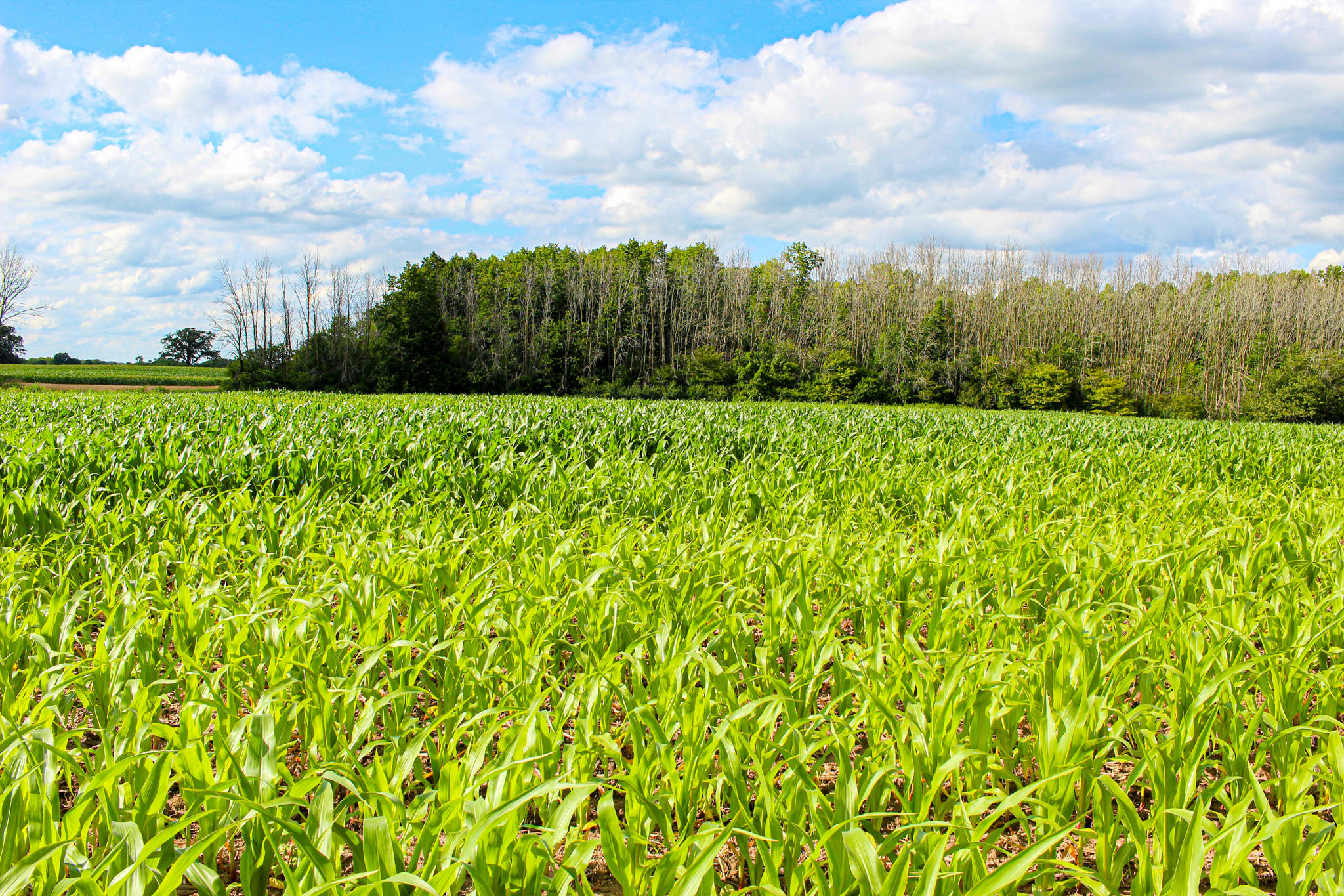 Lt1 Six Mile Rd, Belgium, Wisconsin 53074, ,Vacant Land,For Sale,Six Mile Rd,1700692