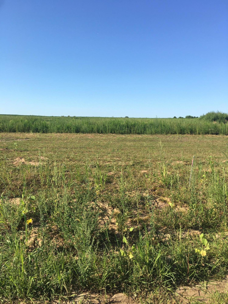 N58W27409 Orchard Hill Ct, Lisbon, Wisconsin 53089, ,Vacant Land,For Sale,Orchard Hill Ct,1703762