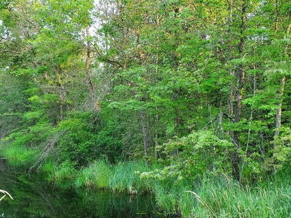 TBD Old cty I & Cty O, Manchester, Wisconsin 54615, ,Vacant Land,For Sale,Old cty I & Cty O,1699440