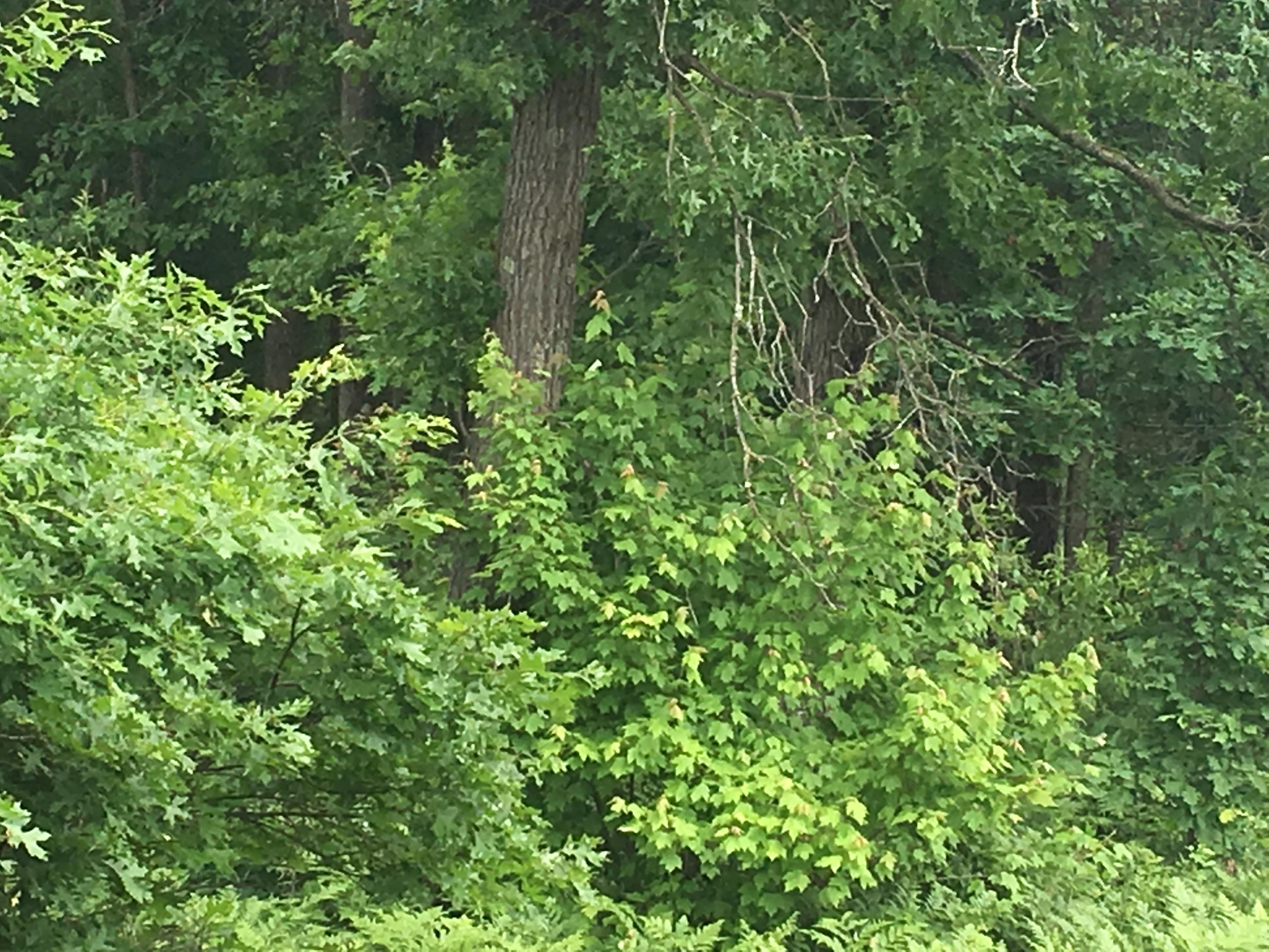 0 COUNTY HIGHWAY PP, Byron, Wisconsin 54660, ,Vacant Land,For Sale,COUNTY HIGHWAY PP,1705201