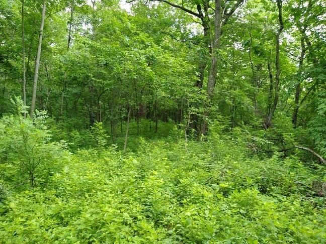 W335 County Rd K, Bergen, Wisconsin 54658, ,Vacant Land,For Sale,County Rd K,1695227