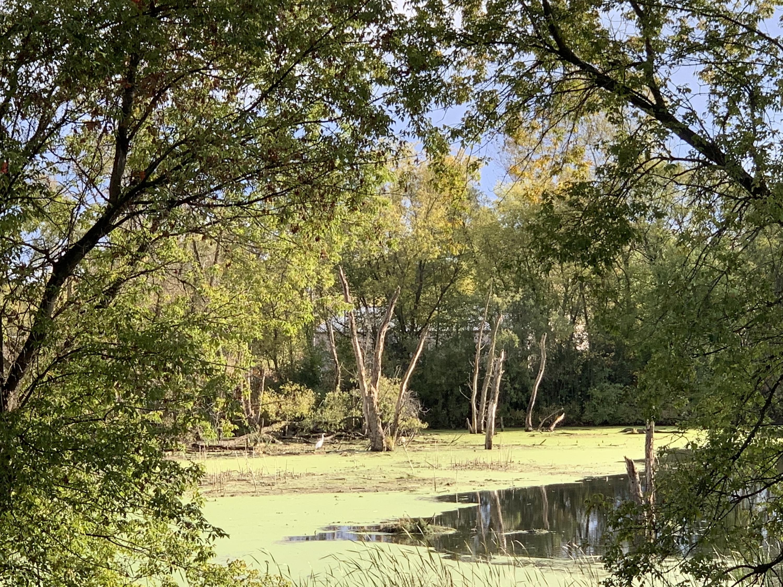 32027 Washington Ave, Rochester, Wisconsin 53167, ,Vacant Land,For Sale,Washington Ave,1696391