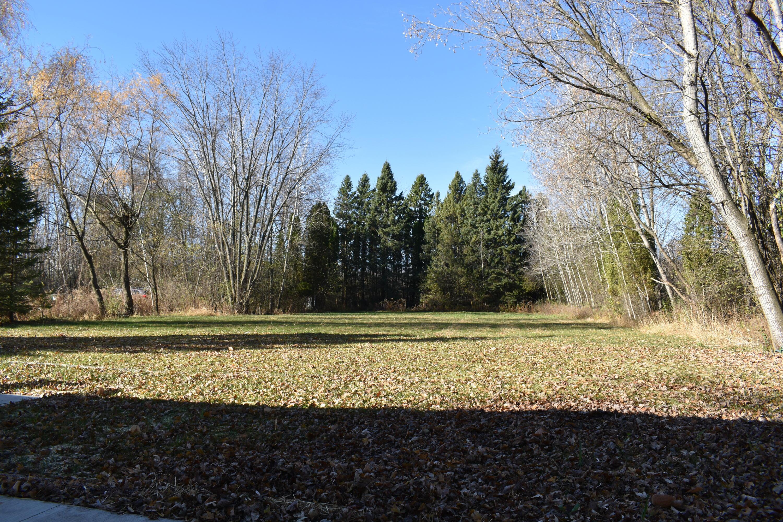 Large Tree lined Back Yard