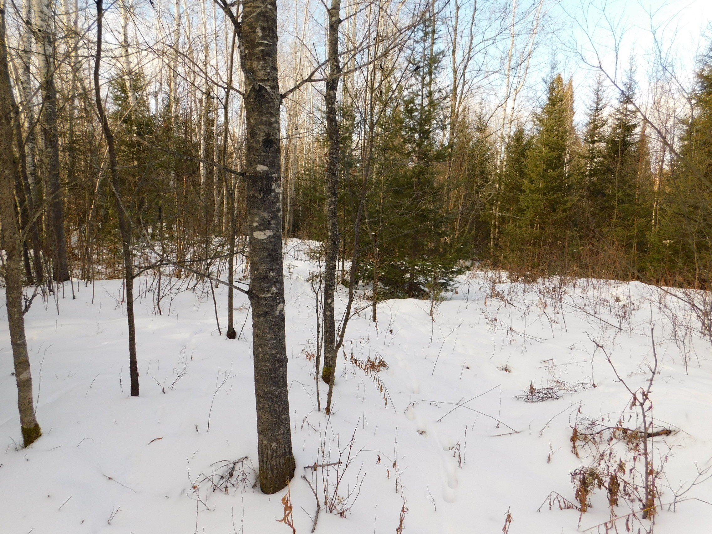 11502 Highway 139, Popple River, Wisconsin 54511, ,Vacant Land,For Sale,Highway 139,1722381