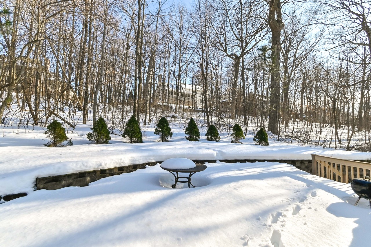 Private Wooded Backyard