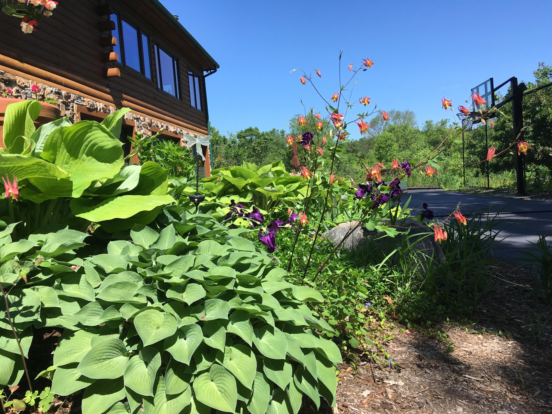 Early Summer Hostas & Irises