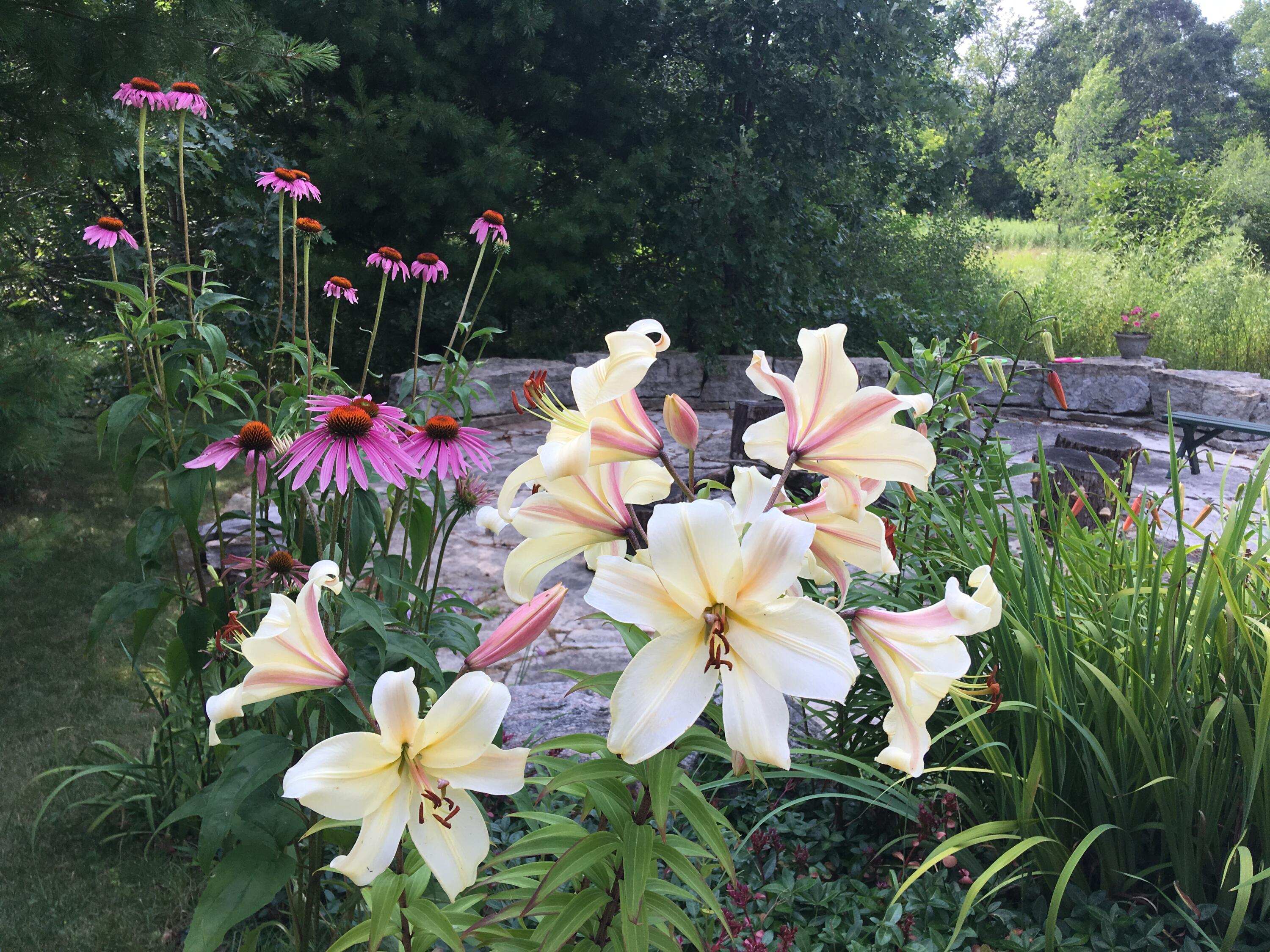 Lilies & Coneflowers at LL Patio Firepit