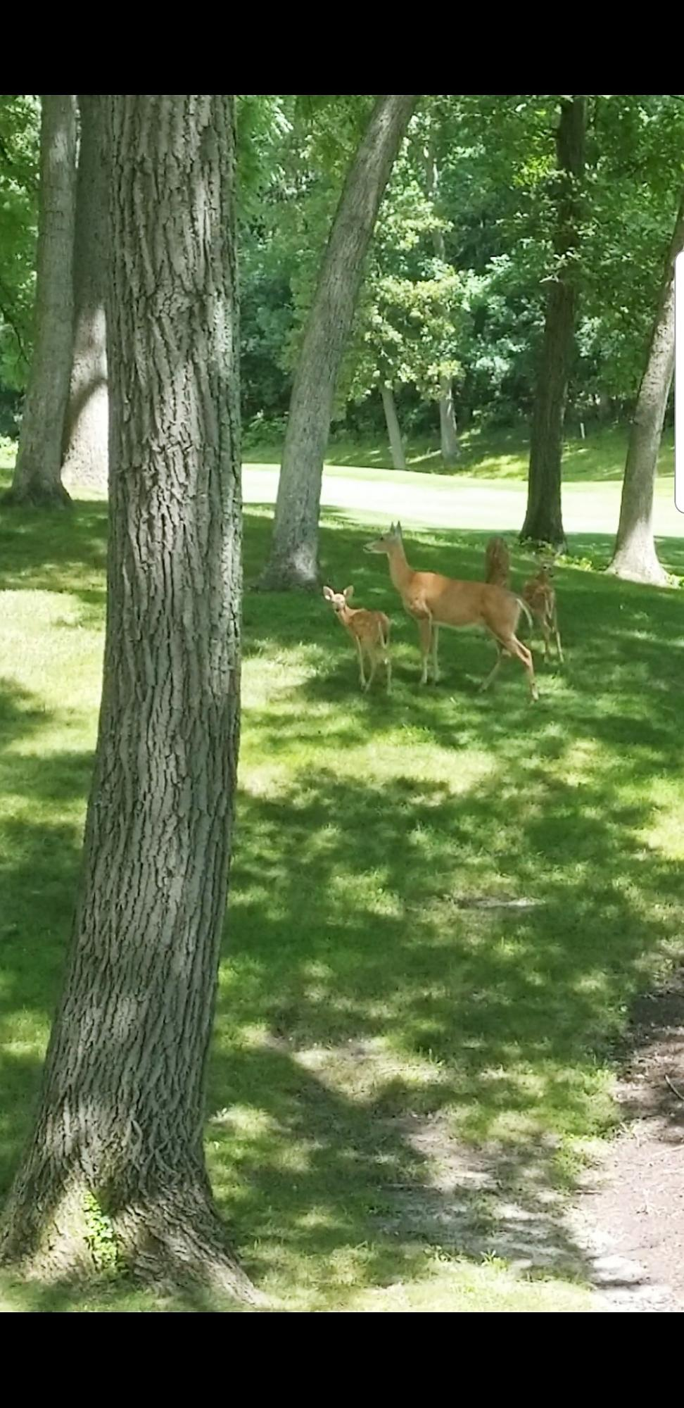 1237 Deer 2