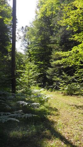 Elect. easemen trail on lake side
