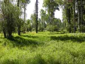 Nhn-Klister Lane, Trout Creek Montana Real Estate Listings