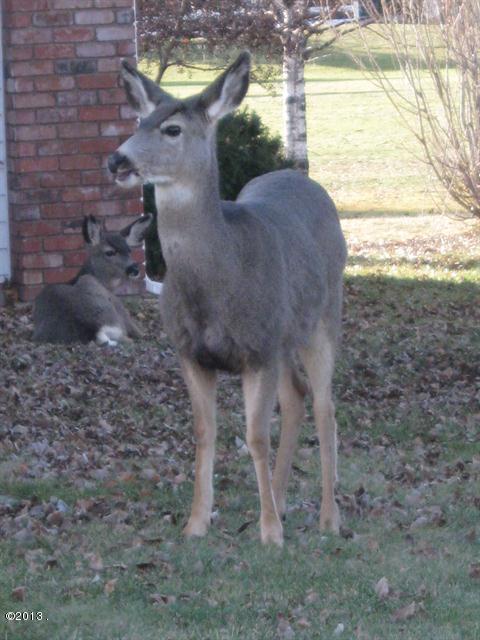 020_Deer near property