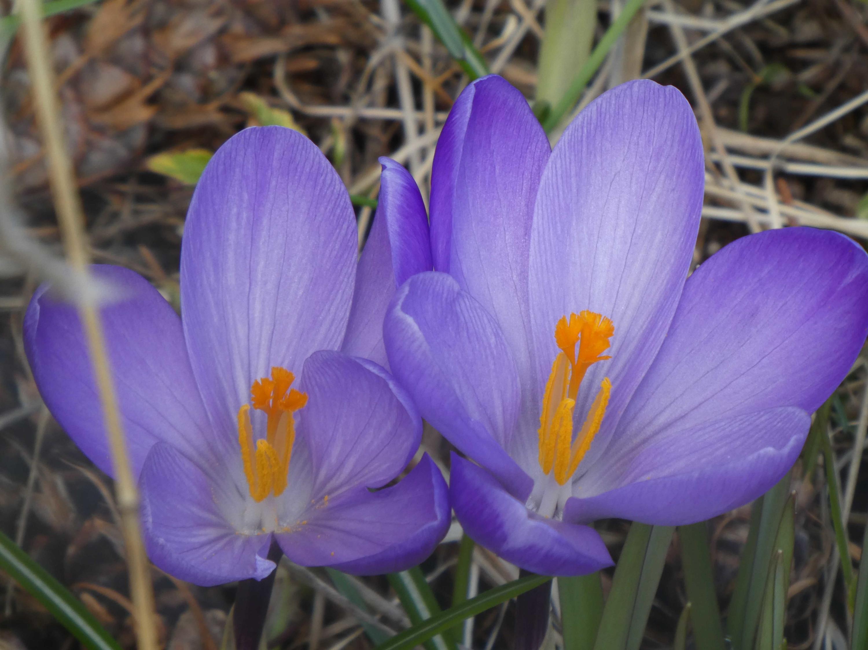 Perenial Flowers