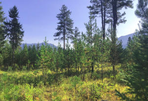 Nhn-Deer Run-Road, Trout Creek Montana Real Estate Listings