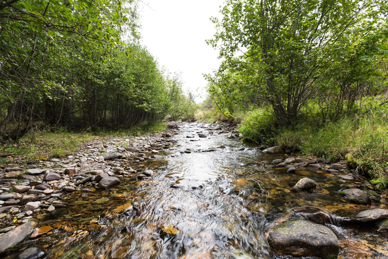 Grant Creek Views