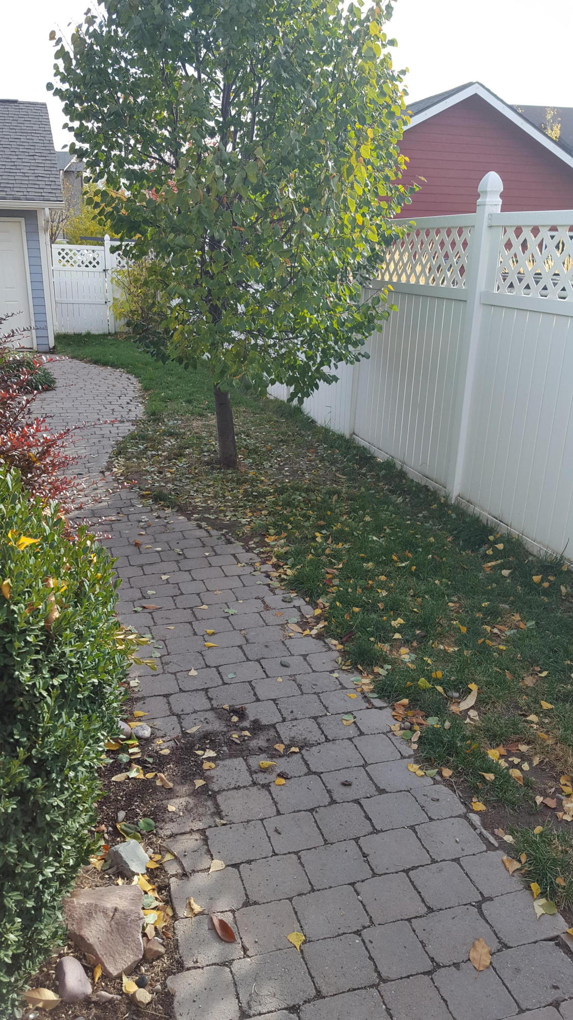 Paver walk from house to garage