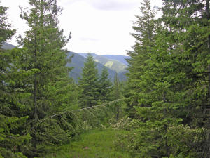 , Thompson Falls Montana Real Estate Listings