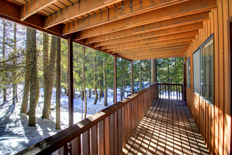 90 Limber Pine