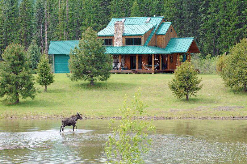 Moose/Home/Pond
