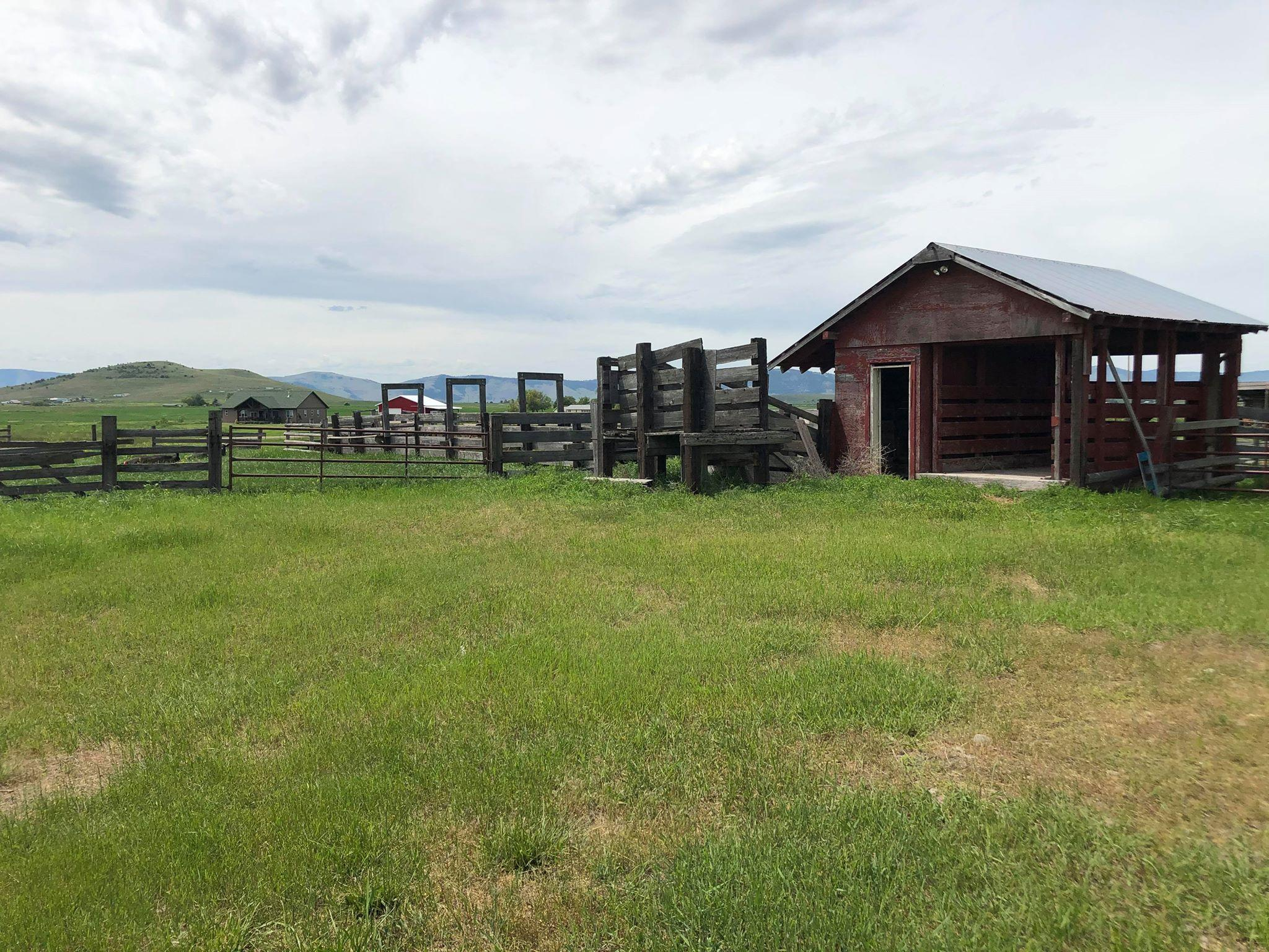 Scale House, Calf chutes, Corrals