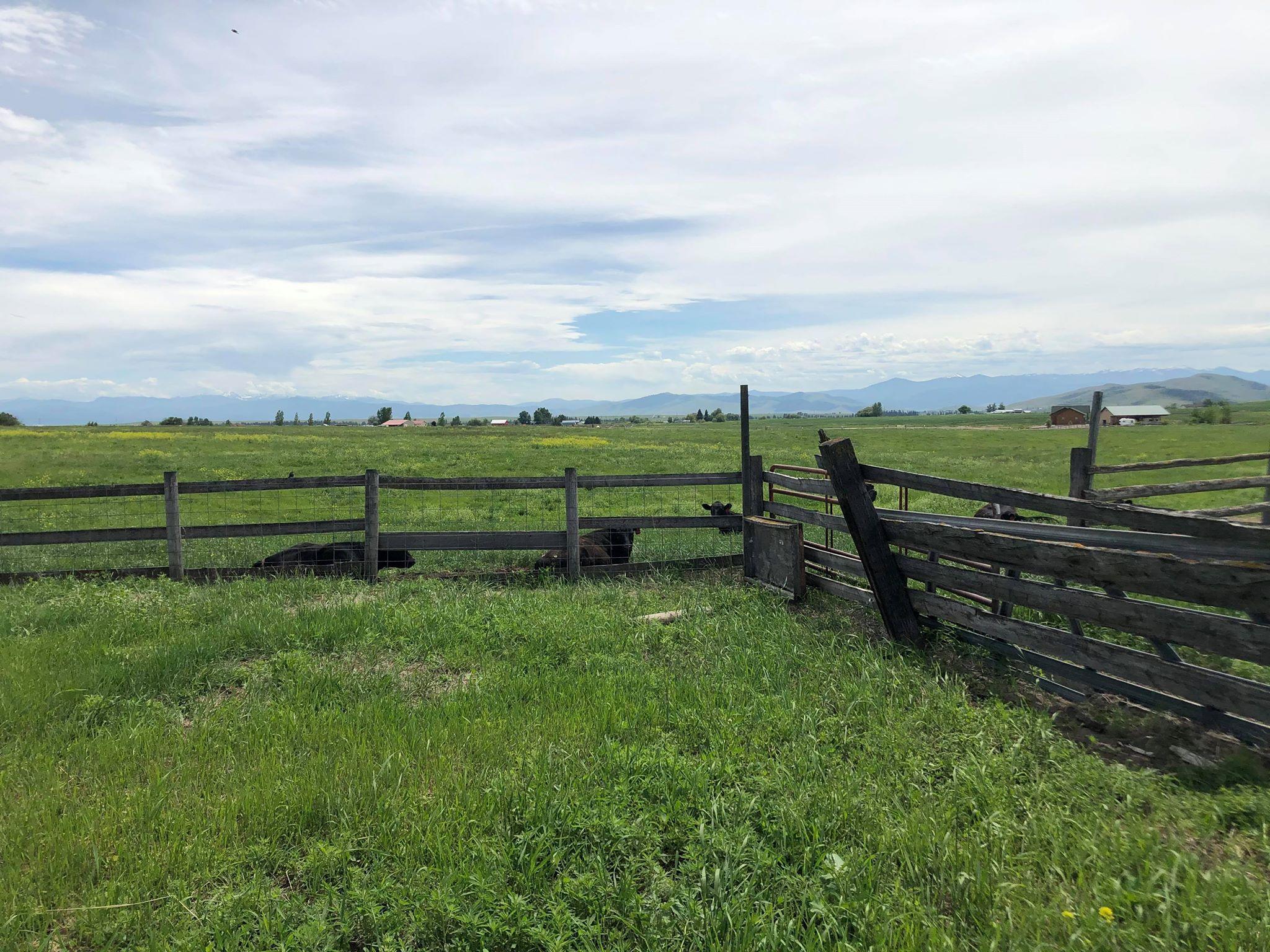 Pastures, Corrals, Etc.
