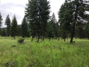 Nhn-Silcox Park-Lane, Thompson Falls Montana Real Estate Listings