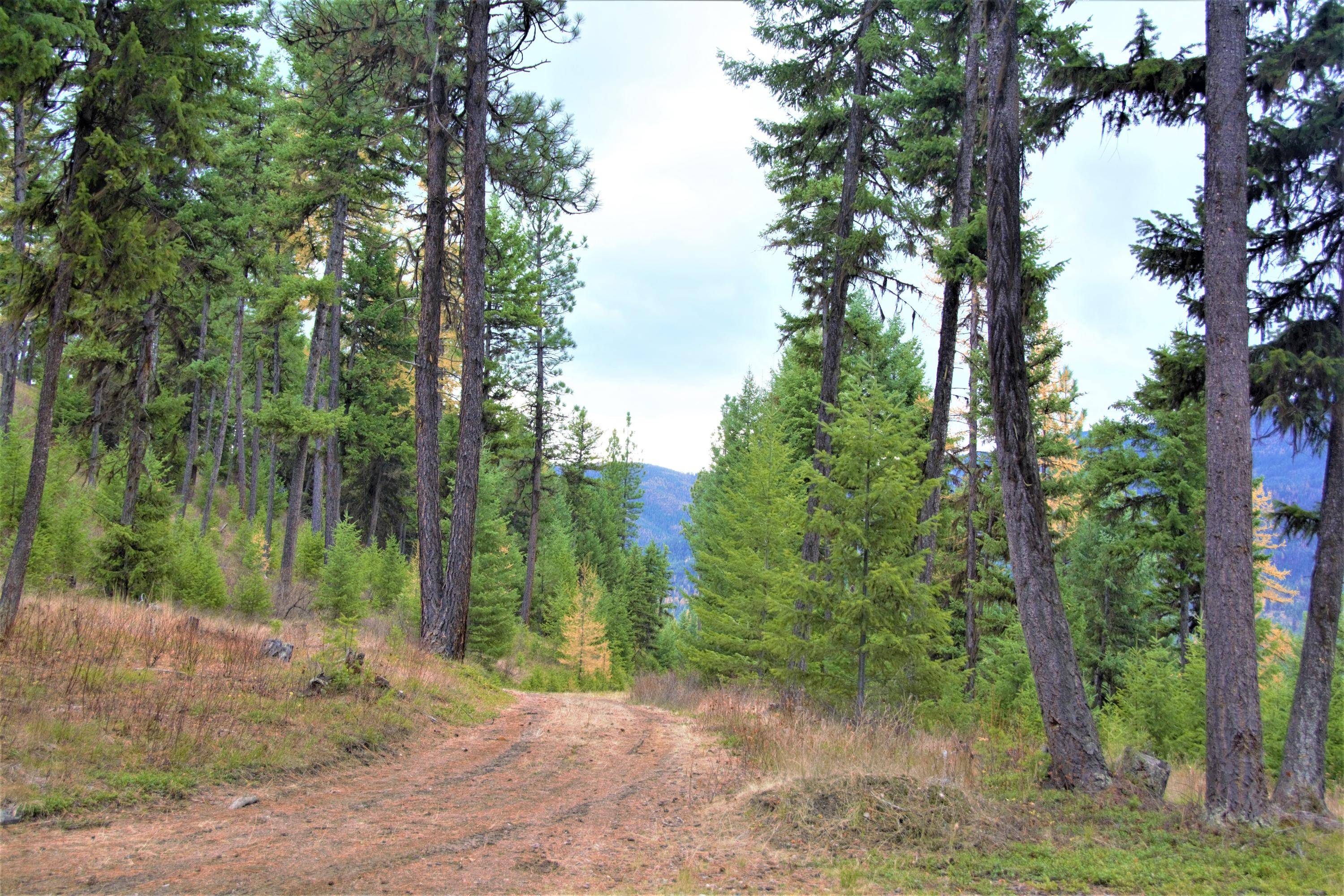 Drive and Property for Cabin for Sale