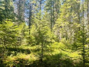 Nhn-Bayside-Lane, Trout Creek Montana Real Estate Listings