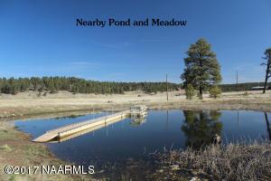 Pond at Park