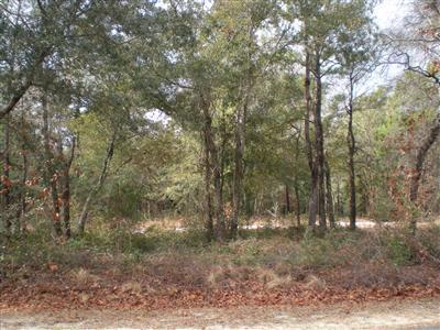 2858 Folly Breeze Lane, Bolivia, North Carolina 28422, ,Residential land,For sale,Folly Breeze,20628470