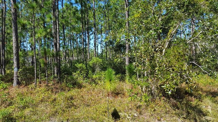 Carolina Plantations Real Estate - MLS Number: 20697071