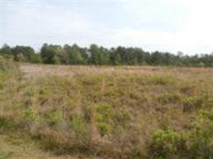 Land for Sale at Address Not Available Holly Ridge, North Carolina 28445 United States