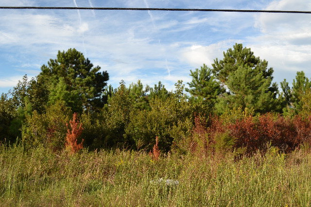 12 Old Folkstone Road, Sneads Ferry, North Carolina 28460, ,Commercial/industrial,For sale,Old Folkstone,40202266
