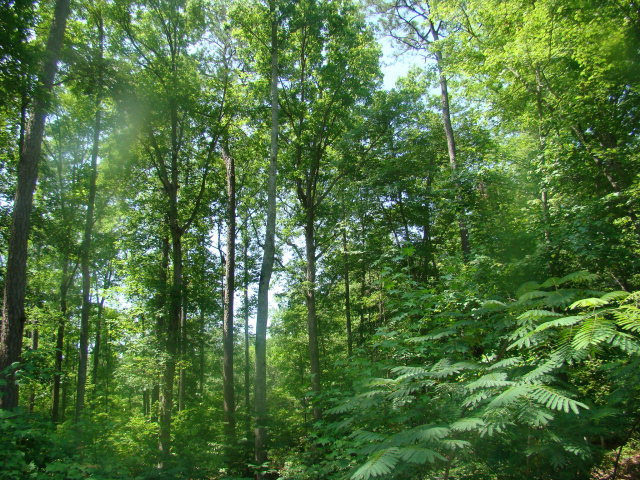 Lot 10 Birch Drive,Blounts Creek,North Carolina,Residential land,Birch,70026686