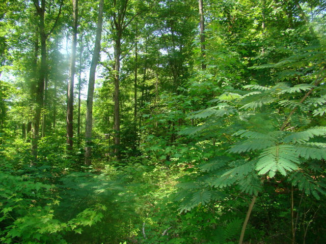Lot 10 Birch Drive, Blounts Creek, North Carolina 27814, ,Residential land,For sale,Birch,70026686