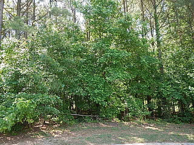 0 Red Oak Battleboro Road, Red Oak, North Carolina 27868, ,Undeveloped,For sale,Red Oak Battleboro,95088124
