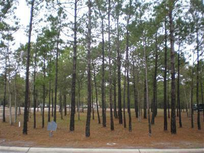 Carolina Plantations Real Estate - MLS Number: 100109377