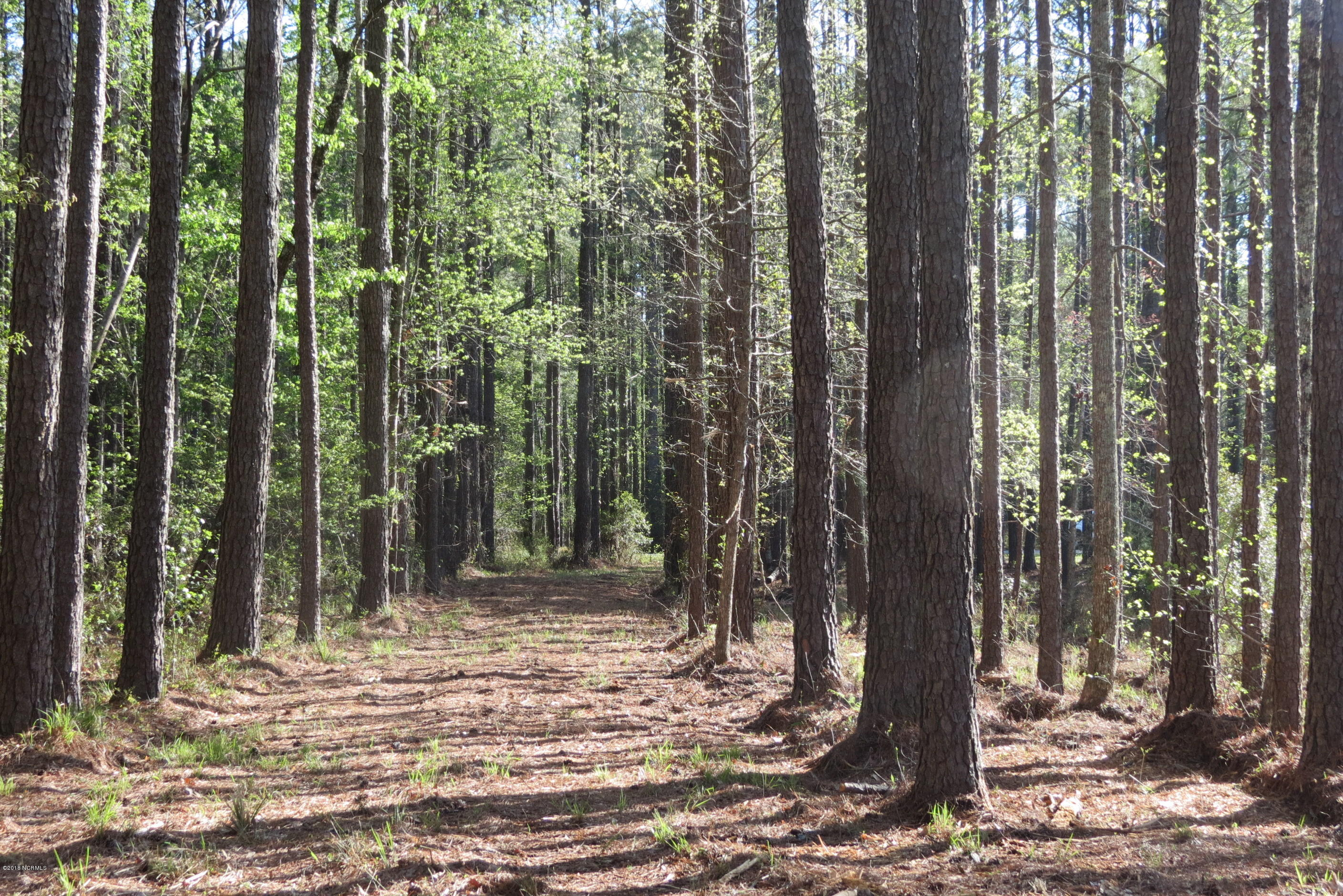 609 Bent Tree Road, Oriental, North Carolina 28571, ,Residential land,For sale,Bent Tree,100105762