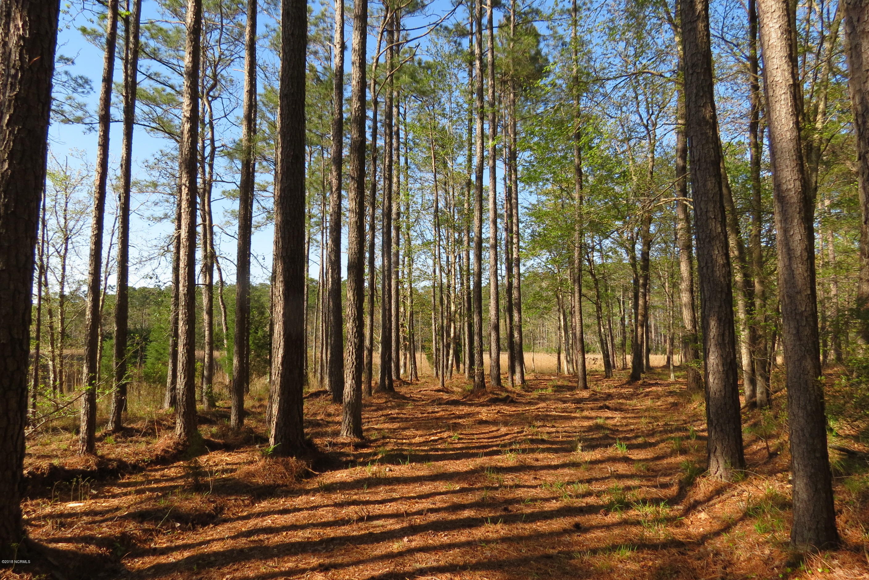 609 Bent Tree Road, Oriental, North Carolina, ,Residential land,For sale,Bent Tree,100105762