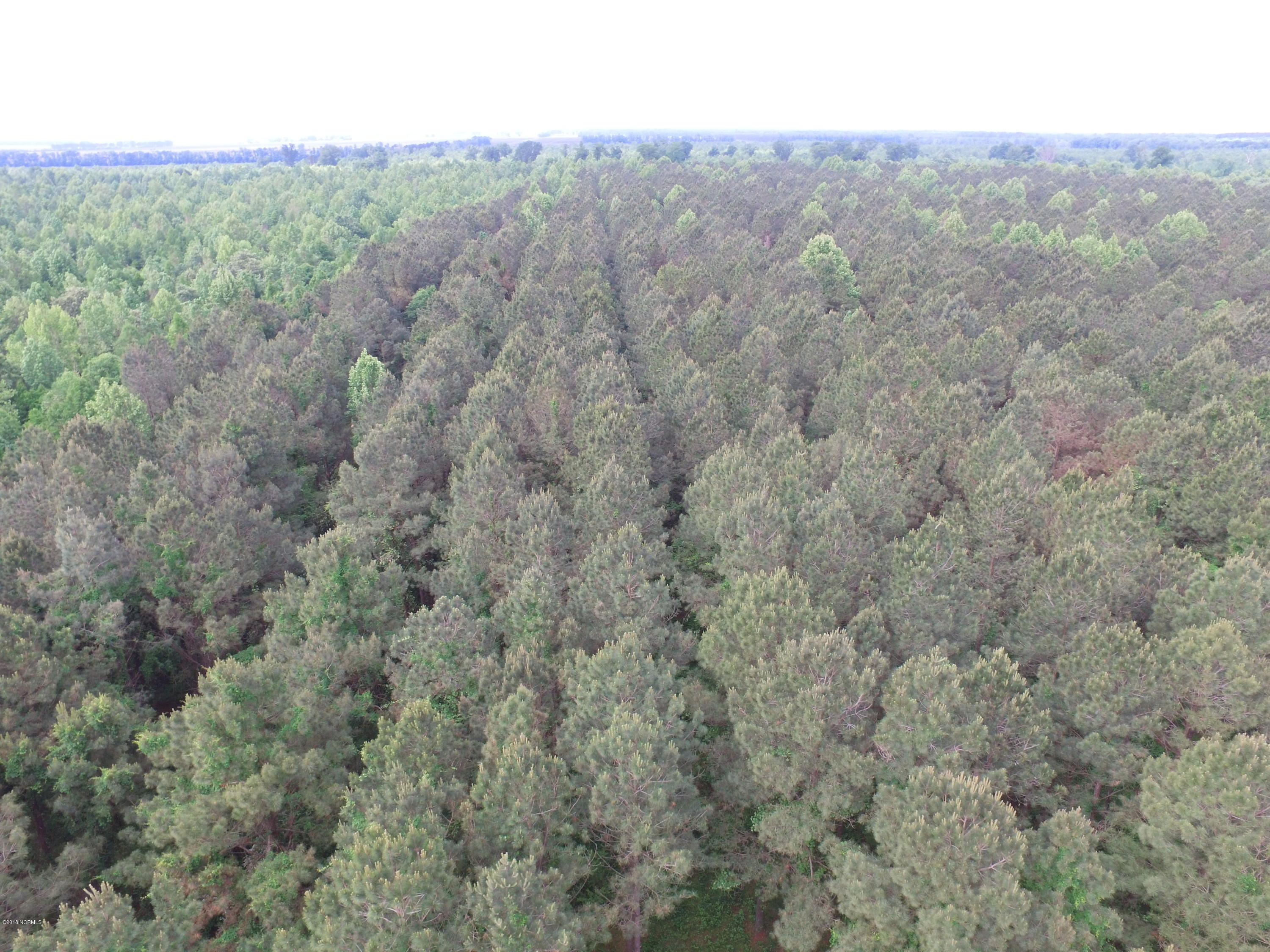 Off State Rd 1621 Off, Pantego, North Carolina 27860, ,Timberland,For sale,State Rd 1621 Off,100018796