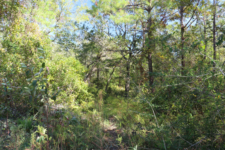 Carolina Plantations Real Estate - MLS Number: 100136807