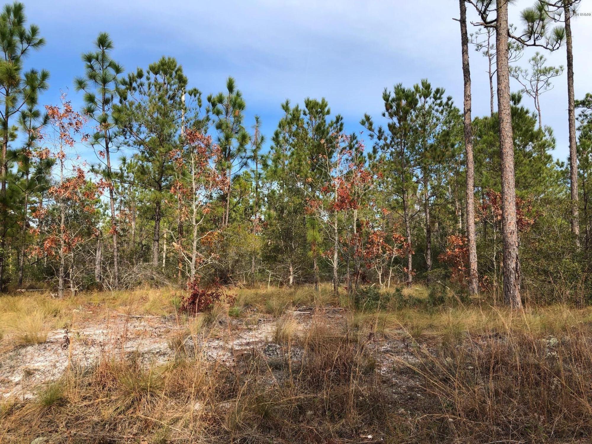Carolina Plantations Real Estate - MLS Number: 100142380
