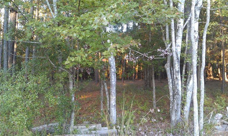Carolina Plantations Real Estate - MLS Number: 100144095