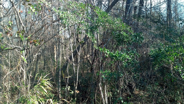 L8 Nc Hwy 50, Holly Ridge, North Carolina 28445, ,Wooded,For sale,Nc Hwy 50,100106883